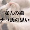 友人の猫、ハナコ氏の思い①