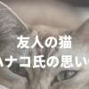 友人の猫、ハナコ氏の思い③
