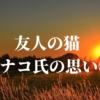 友人の猫、ハナコ氏の思い②