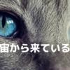 宇宙から来ている猫①